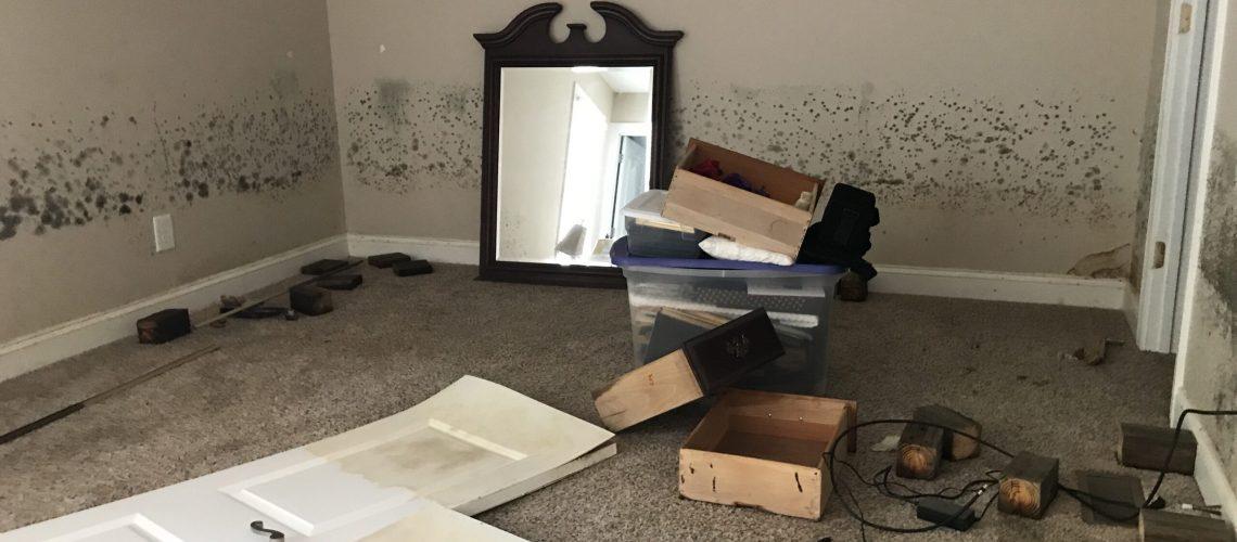 House mold photo